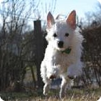 Adopt A Pet :: Pamela Danderson - Mount Gretna, PA
