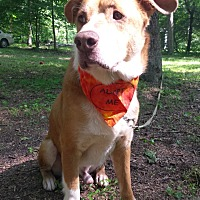 Adopt A Pet :: Biscuit Basket - Capon Bridge, WV