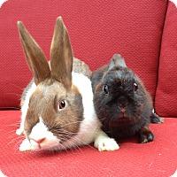 Adopt A Pet :: Hershey & Nestle - Watauga, TX