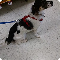 Adopt A Pet :: Kelly - Simi Valley, CA