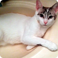 Adopt A Pet :: Milo - Kalamazoo, MI