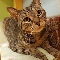 Adopt A Pet :: Lila - Westbury, NY