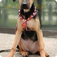 Adopt A Pet :: Doris-Dong - Seattle, WA