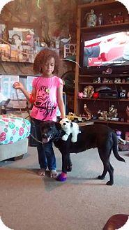 Labrador Retriever Mix Dog for adoption in Decatur, Alabama - GYPSY
