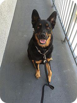 German Shepherd Dog/German Shepherd Dog Mix Dog for adoption in San Diego, California - Tabitha