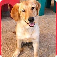 Adopt A Pet :: Sheba (PLACED) Adoption_Pending - Glendale, AZ
