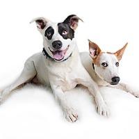 Adopt A Pet :: Lily (fka Tamara) - Wilmington, DE