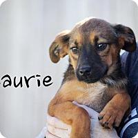 Adopt A Pet :: Laurie - Joliet, IL