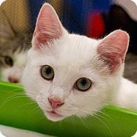 Adopt A Pet :: Waffle - Troy, MI