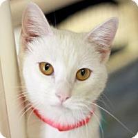 Adopt A Pet :: PETRA - Kyle, TX