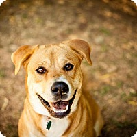 Adopt A Pet :: Marge - Hayward, CA