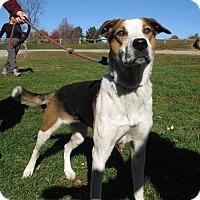 Adopt A Pet :: Toni - Unionville, PA