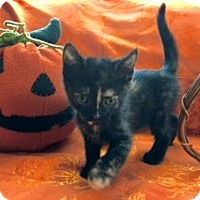 Adopt A Pet :: Assorted kittens - Los Angeles, CA