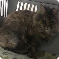 Adopt A Pet :: Cheetara - Saylorsburg, PA