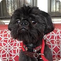 Adopt A Pet :: Earl - Memphis, TN