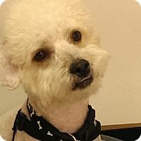 Adopt A Pet :: Norman - Thousand Oaks, CA