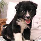 Adopt A Pet :: Coltrane