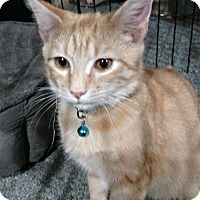 Adopt A Pet :: Jack2 - Jeannette, PA