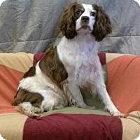 Adopt A Pet :: Calynda - Green Bay, WI