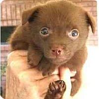 Adopt A Pet :: Marfa - Kingwood, TX