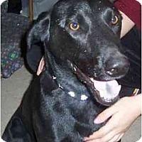 Adopt A Pet :: Brandon - Scottsdale, AZ