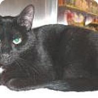 Adopt A Pet :: Ashley - Springfield, PA
