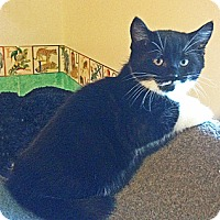Adopt A Pet :: Hurricane - N. Billerica, MA