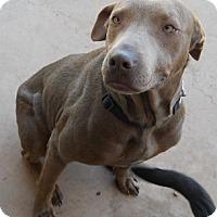 Adopt A Pet :: Emerald - dewey, AZ