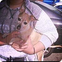 Adopt A Pet :: Willa - San Francisco, CA