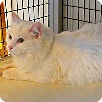 Adopt A Pet :: Crystal - Victor, NY