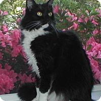 Adopt A Pet :: Frisco - Laguna Woods, CA
