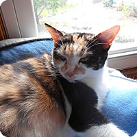 Adopt A Pet :: Little Lady - Richland, MI