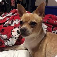 Adopt A Pet :: Reba - Rancho Cucamonga, CA