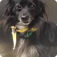 Adopt A Pet :: Kelsey - Oak Ridge, NJ