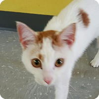 "Adopt A Pet :: ""  Lily  "" - Scottsburg, IN"