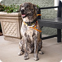 Adopt A Pet :: Iggy - Maryville, TN