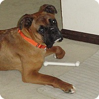 Adopt A Pet :: Tag-Along - Dayton, OH