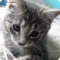 Adopt A Pet :: Powder - Kirkwood, DE