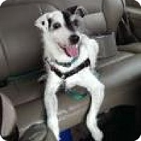 Adopt A Pet :: CORKY - Young Sr. needs foster - Bainbridge Island, WA