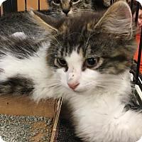 Adopt A Pet :: King Tut - Phillipsburg, NJ