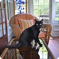 Adopt A Pet :: Padme - Des Moines, IA