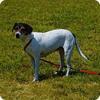 Adopt A Pet :: Ciara-072710j - Tupelo, MS