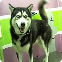 Adopt A Pet :: Kristof - Aurora, CO