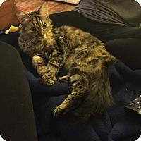 Adopt A Pet :: Charlotte - Charlotte, MI