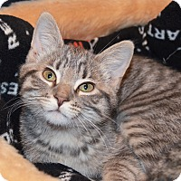 Adopt A Pet :: Pauline - Lincoln, NE