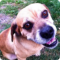Adopt A Pet :: Marty - Flossmoor, IL