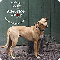 Adopt A Pet :: Louie - Victoria, BC