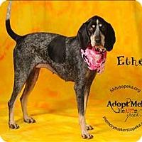 Adopt A Pet :: Ethel - Topeka, KS