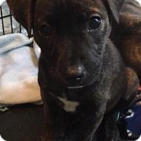 Adopt A Pet :: Gracie - Broken Arrow, OK