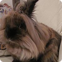Adopt A Pet :: Azazi - Williston, FL